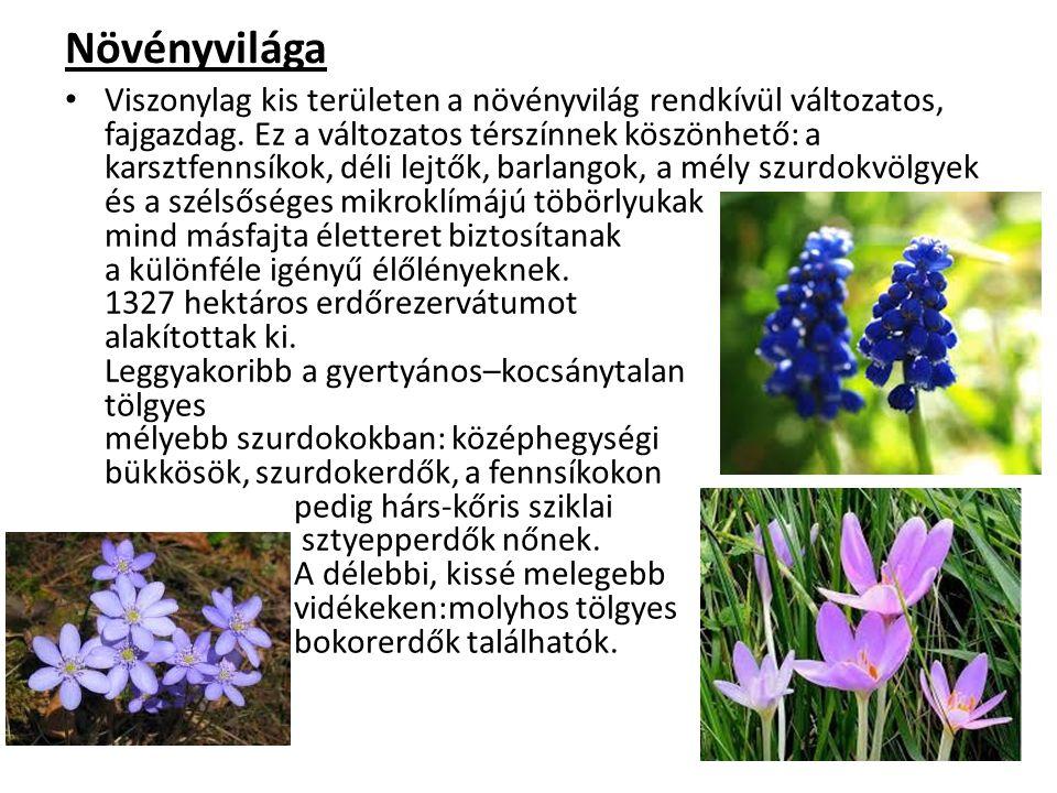 Növényvilága Viszonylag kis területen a növényvilág rendkívül változatos, fajgazdag. Ez a változatos térszínnek köszönhető: a karsztfennsíkok, déli le