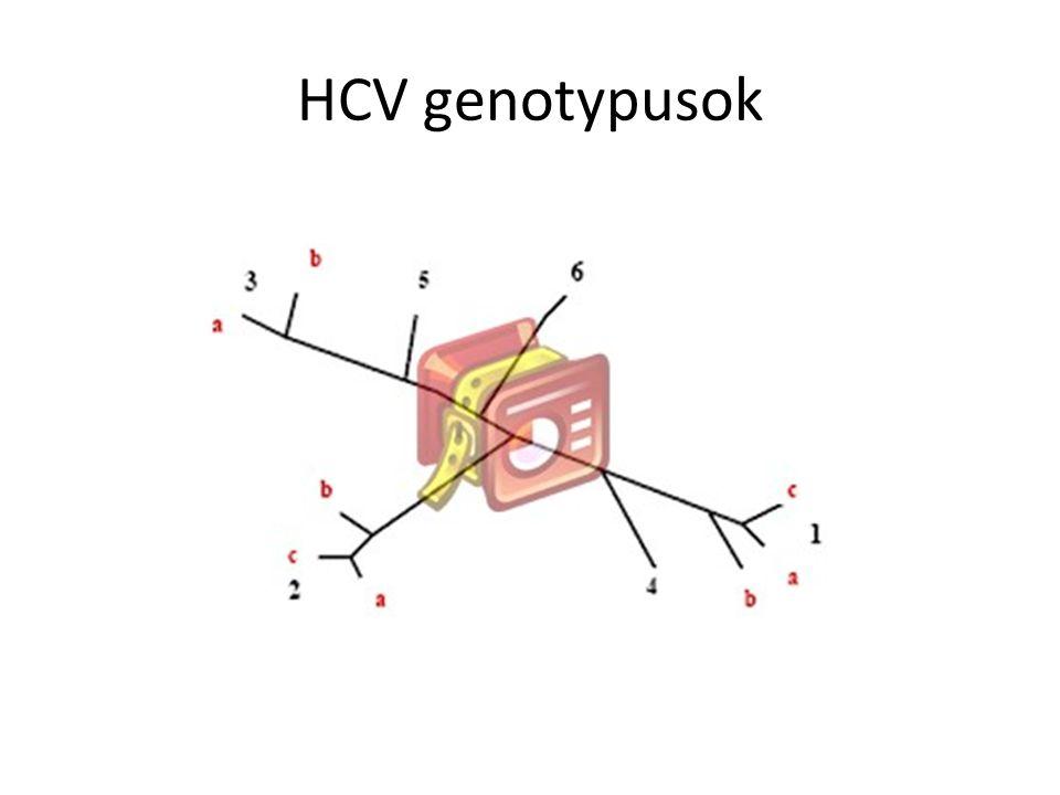 HCV genotypusok megoszlása
