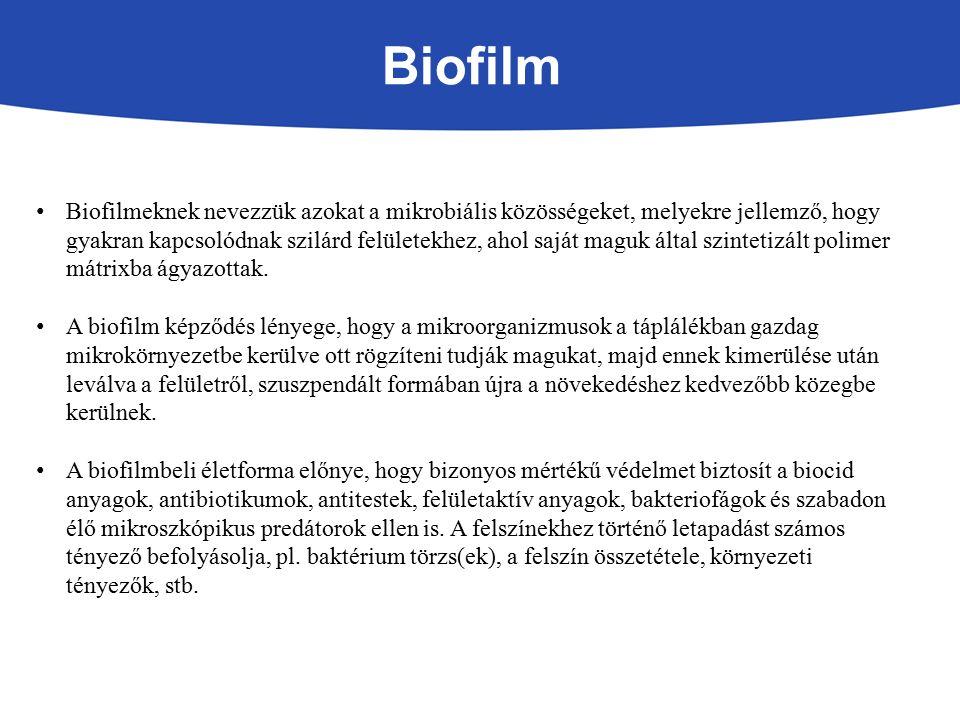 Biofilm Biofilmeknek nevezzük azokat a mikrobiális közösségeket, melyekre jellemző, hogy gyakran kapcsolódnak szilárd felületekhez, ahol saját maguk által szintetizált polimer mátrixba ágyazottak.