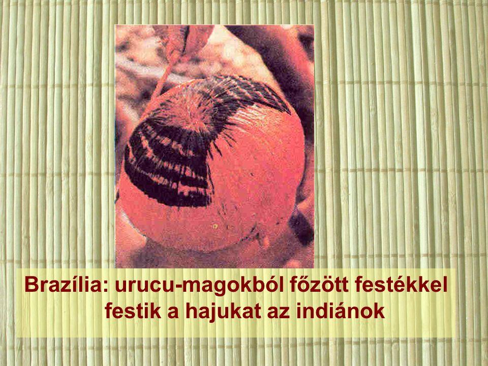 Brazília: urucu-magokból főzött festékkel festik a hajukat az indiánok