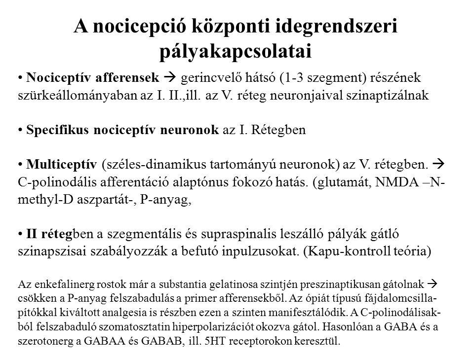 Nociceptív afferensek  gerincvelő hátsó (1-3 szegment) részének szürkeállományaban az I.