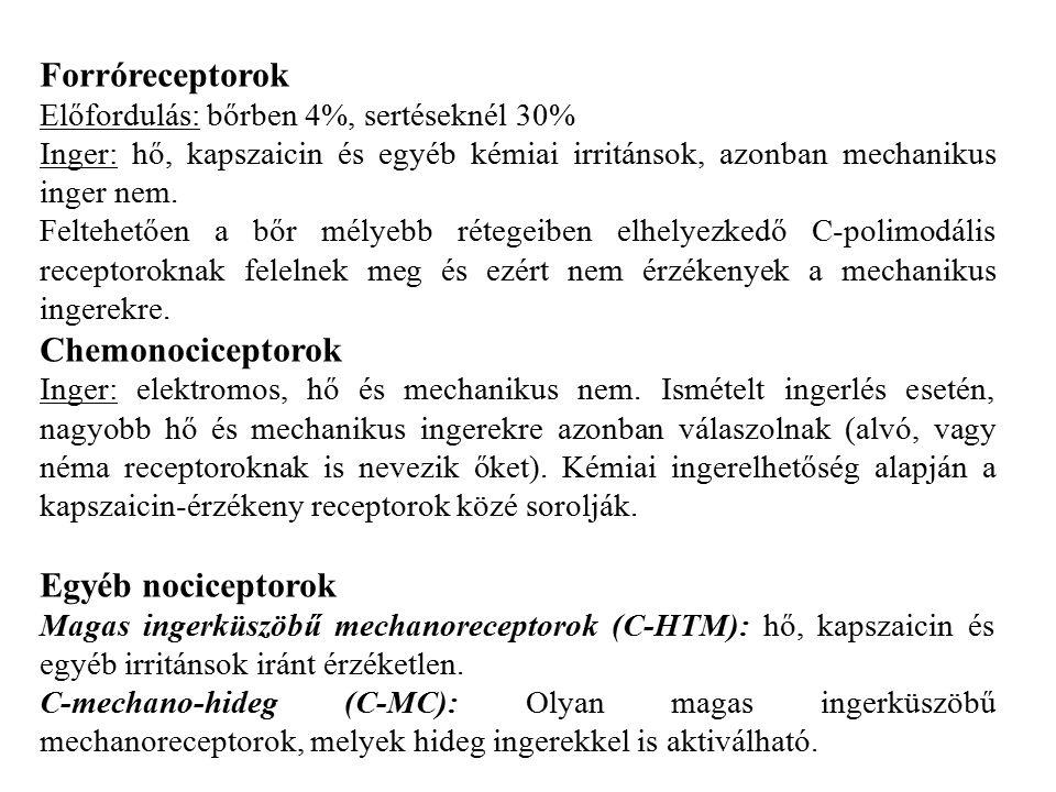 Forróreceptorok Előfordulás: bőrben 4%, sertéseknél 30% Inger: hő, kapszaicin és egyéb kémiai irritánsok, azonban mechanikus inger nem.