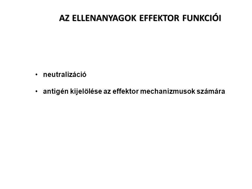 -Muromonab-CD3 (OKT-3) egér.