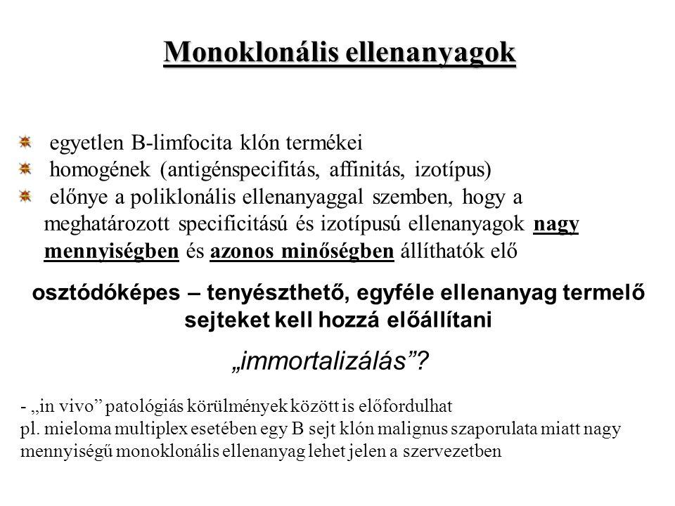 Monoklonális ellenanyagok egyetlen B-limfocita klón termékei homogének (antigénspecifitás, affinitás, izotípus) előnye a poliklonális ellenanyaggal sz