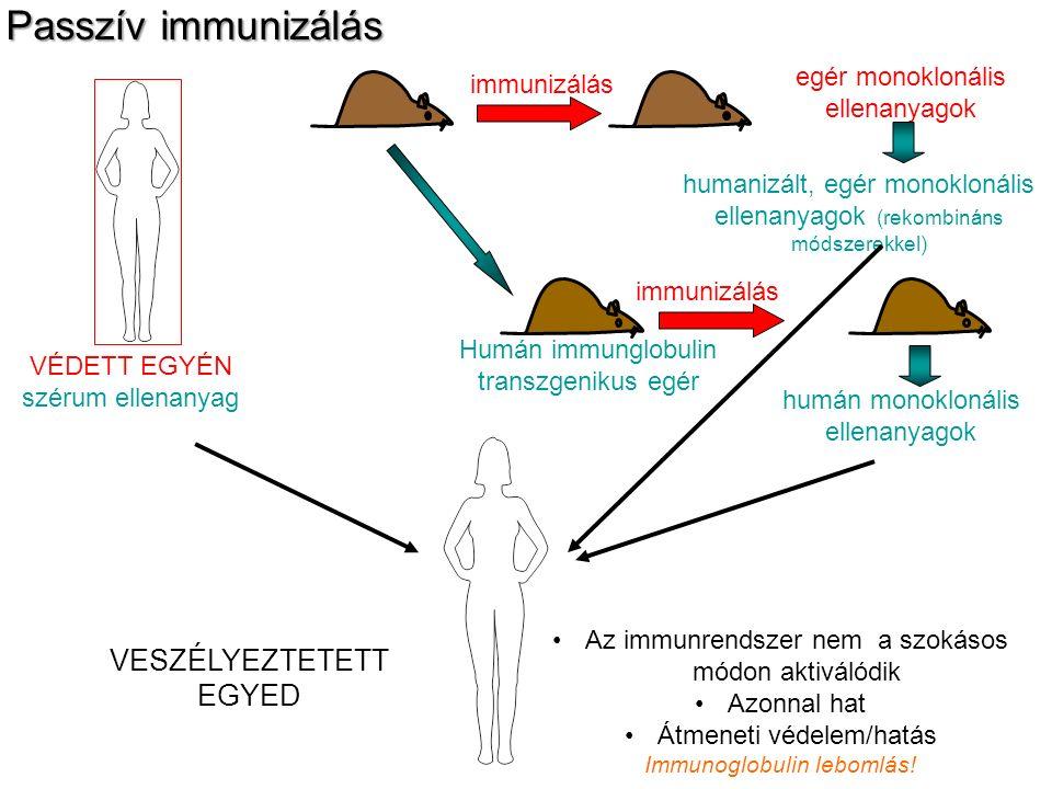 VÉDETT EGYÉN szérum ellenanyag Humán immunglobulin transzgenikus egér immunizálás egér monoklonális ellenanyagok immunizálás humán monoklonális ellena