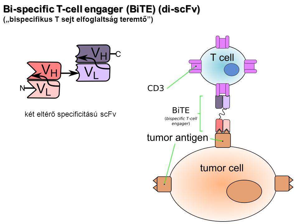 """Bi-specific T-cell engager (BiTE) (di-scFv) (""""bispecifikus T sejt elfoglaltság teremtő"""") két eltérő specificitású scFv"""
