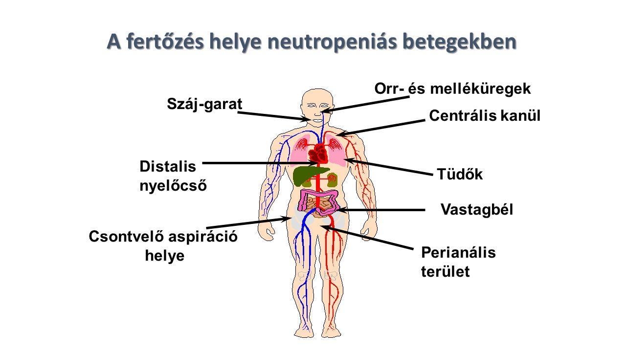 A fertőzés helye neutropeniás betegekben Száj-garat Centrális kanül Tüdők Distalis nyelőcső Vastagbél Perianális terület Csontvelő aspiráció helye Orr- és melléküregek
