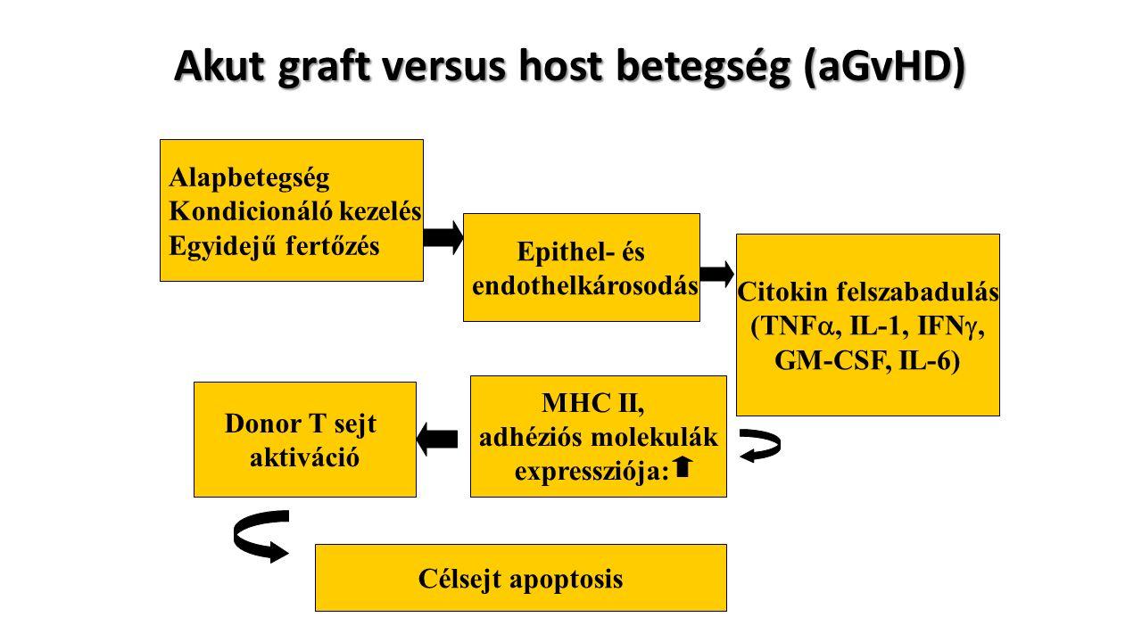 Alapbetegség Kondicionáló kezelés Egyidejű fertőzés Epithel- és endothelkárosodás Citokin felszabadulás (TNF , IL-1, IFN , GM-CSF, IL-6) Akut graft versus host betegség (aGvHD) MHC II, adhéziós molekulák expressziója: Donor T sejt aktiváció Célsejt apoptosis