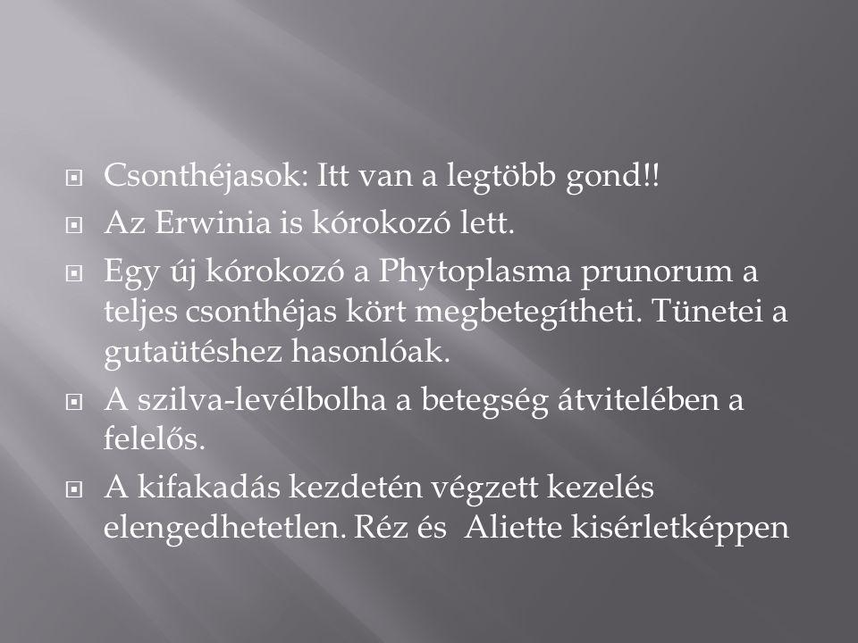  Csonthéjasok: Itt van a legtöbb gond!.  Az Erwinia is kórokozó lett.