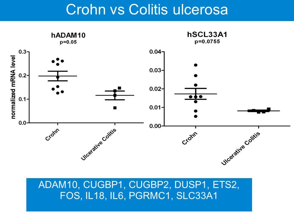 IBD Crohn vs Colitis ulcerosa Egészséges Crohn Colitis ulcerosa