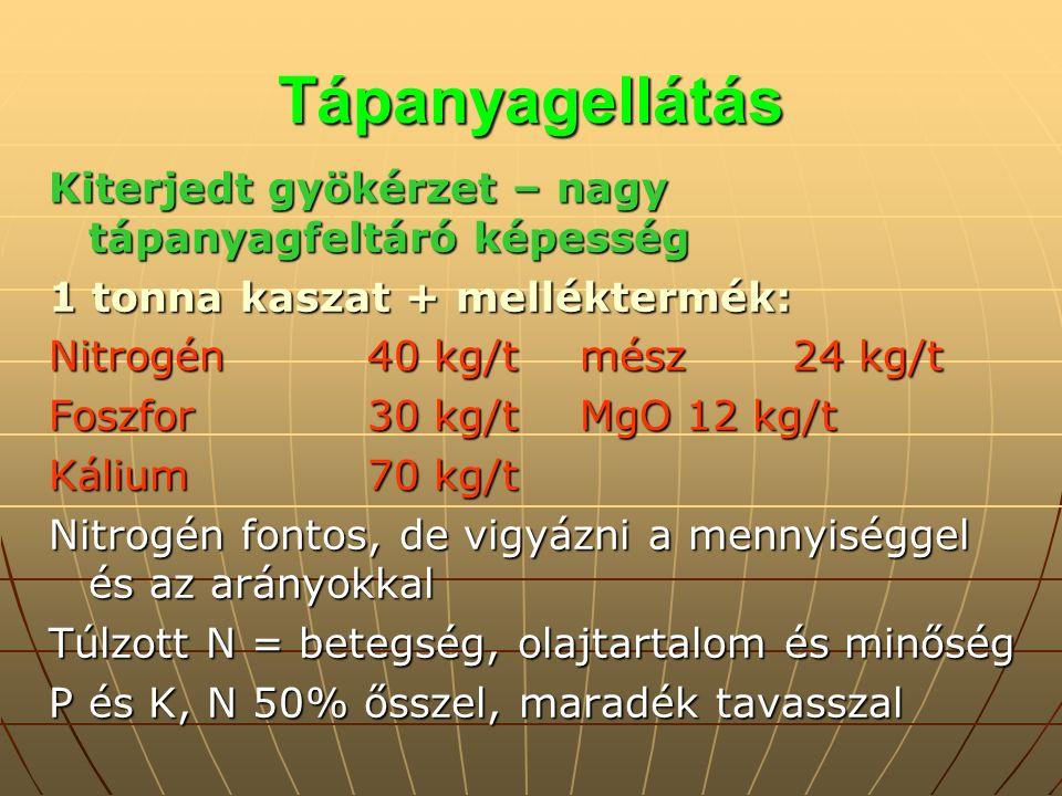 Tápanyagellátás Kiterjedt gyökérzet – nagy tápanyagfeltáró képesség 1 tonna kaszat + melléktermék: Nitrogén40 kg/tmész24 kg/t Foszfor30 kg/tMgO12 kg/t Kálium70 kg/t Nitrogén fontos, de vigyázni a mennyiséggel és az arányokkal Túlzott N = betegség, olajtartalom és minőség P és K, N 50% ősszel, maradék tavasszal