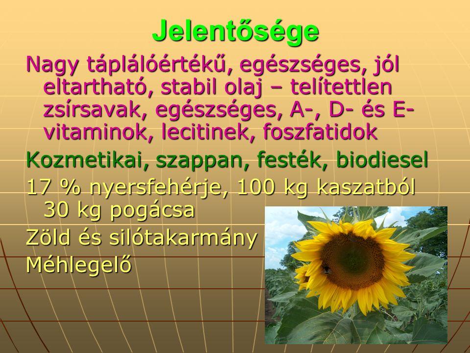 Jelentősége Nagy táplálóértékű, egészséges, jól eltartható, stabil olaj – telítettlen zsírsavak, egészséges, A-, D- és E- vitaminok, lecitinek, foszfatidok Kozmetikai, szappan, festék, biodiesel 17 % nyersfehérje, 100 kg kaszatból 30 kg pogácsa Zöld és silótakarmány Méhlegelő