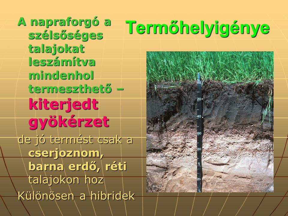 Termőhelyigénye A napraforgó a szélsőséges talajokat leszámítva mindenhol termeszthető – kiterjedt gyökérzet de jó termést csak a cserjoznom, barna erdő, réti talajokon hoz Különösen a hibridek
