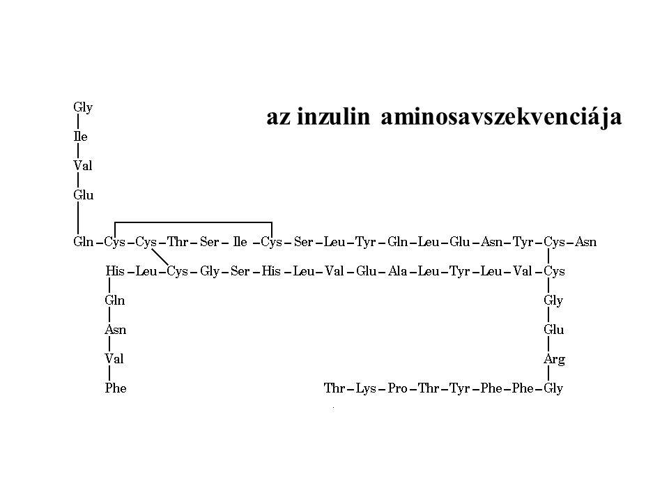 az inzulin aminosavszekvenciája