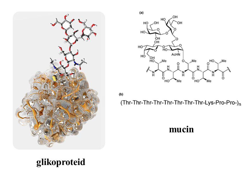 mucin glikoproteid