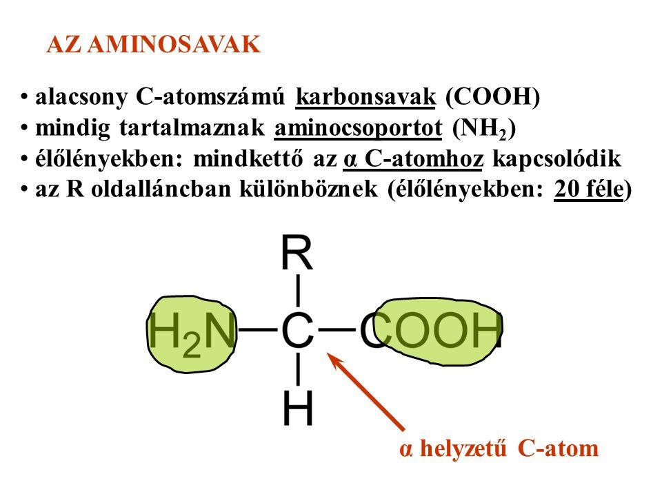 AZ AMINOSAVAK alacsony C-atomszámú karbonsavak (COOH) mindig tartalmaznak aminocsoportot (NH 2 ) élőlényekben: mindkettő az α C-atomhoz kapcsolódik az R oldalláncban különböznek (élőlényekben: 20 féle) α helyzetű C-atom