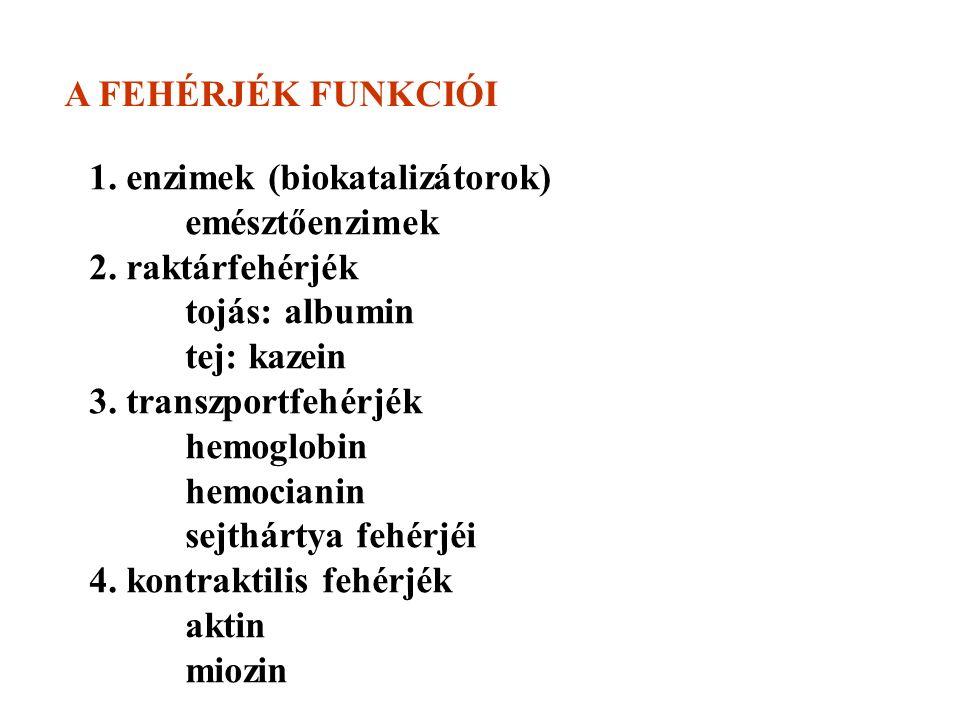 A FEHÉRJÉK FUNKCIÓI 1. enzimek (biokatalizátorok) emésztőenzimek 2.