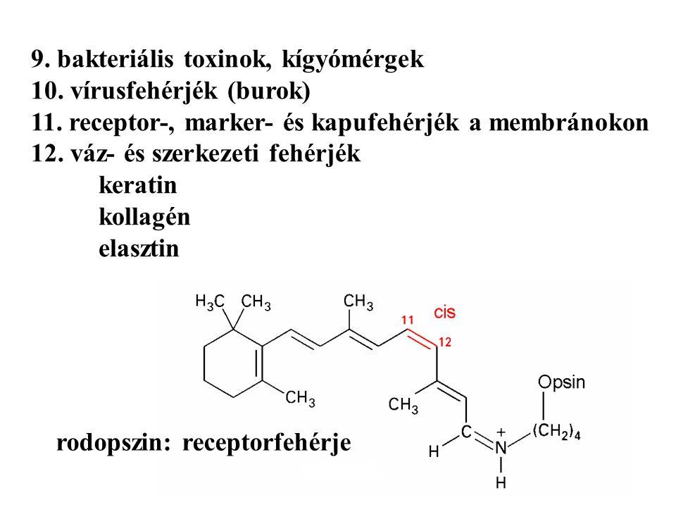 9. bakteriális toxinok, kígyómérgek 10. vírusfehérjék (burok) 11.