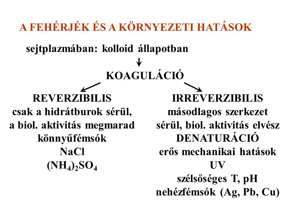 A FEHÉRJÉK ÉS A KÖRNYEZETI HATÁSOK sejtplazmában: kolloid állapotban KOAGULÁCIÓ REVERZIBILIS csak a hidrátburok sérül, a biol.