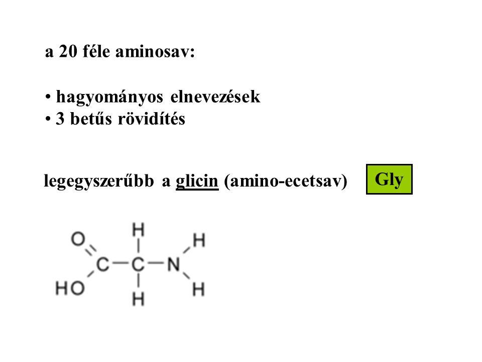 legegyszerűbb a glicin (amino-ecetsav) a 20 féle aminosav: hagyományos elnevezések 3 betűs rövidítés Gly