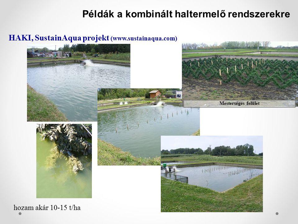 Példák a kombinált haltermelő rendszerekre HAKI, SustainAqua projekt (www.sustainaqua.com) Mesterséges felület hozam akár 10-15 t/ha