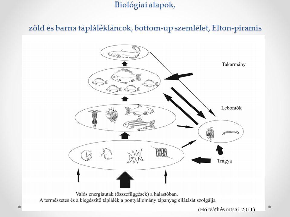 Biológiai alapok, zöld és barna táplálékláncok, bottom-up szemlélet, Elton-piramis (Horváth és mtsai, 2011)