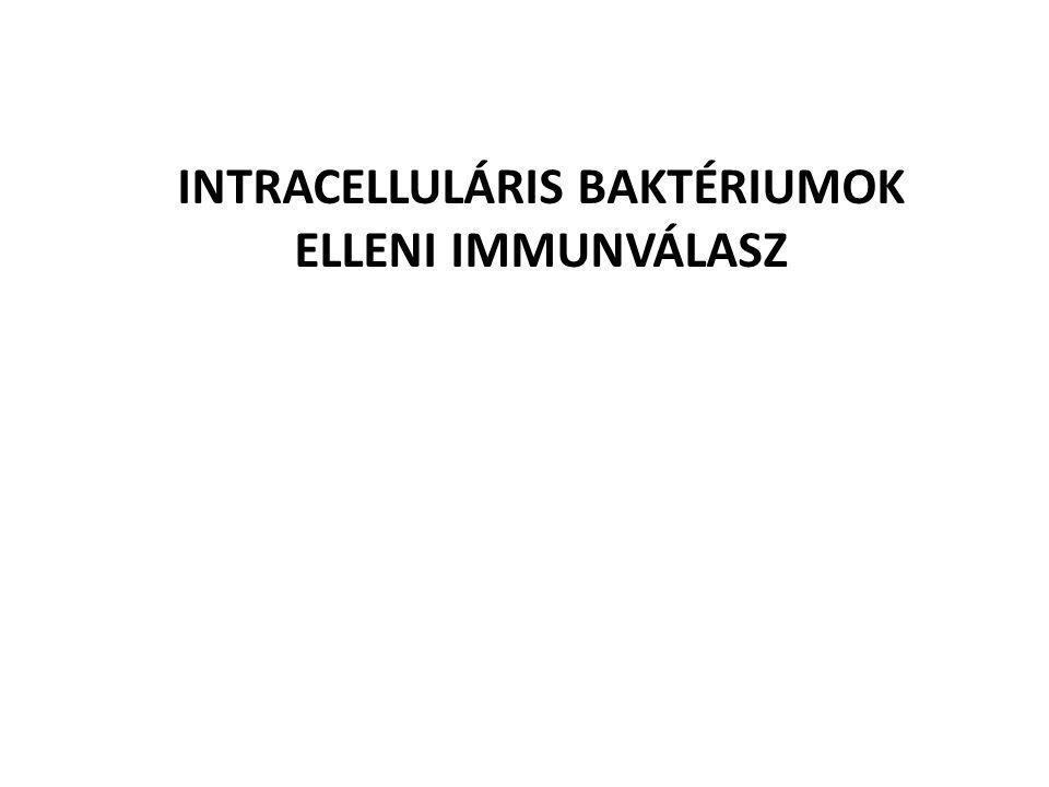 Nem fertőzött makrofágok és limfociták körülveszik a fertőzött sejteket