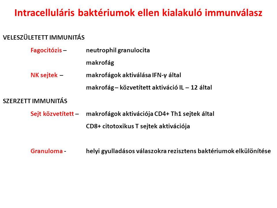 Intracelluláris baktériumok ellen kialakuló immunválasz VELESZÜLETETT IMMUNITÁS Fagocitózis – neutrophil granulocita makrofág NK sejtek – makrofágok aktiválása IFN-γ által makrofág – közvetített aktiváció IL – 12 által SZERZETT IMMUNITÁS Sejt közvetített – makrofágok aktivációja CD4+ Th1 sejtek által CD8+ citotoxikus T sejtek aktivációja Granuloma - helyi gyulladásos válaszokra rezisztens baktériumok elkülönítése
