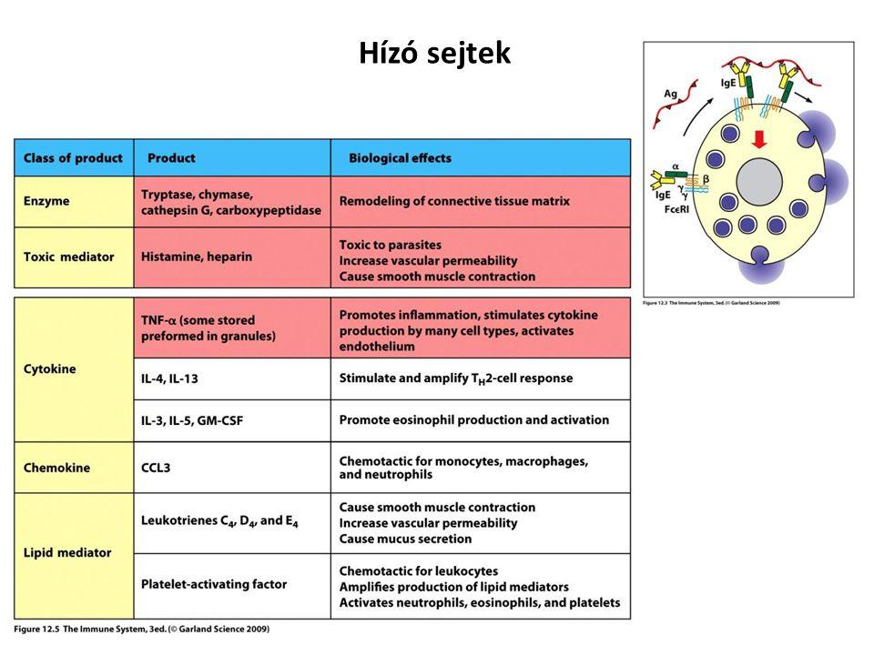 Hízó sejtek