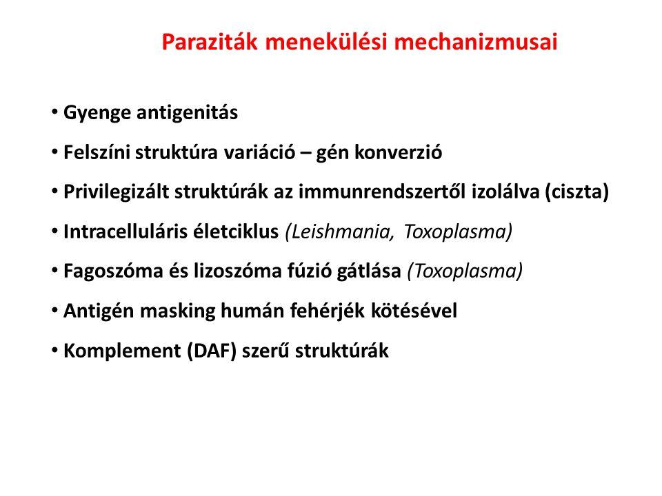 Gyenge antigenitás Felszíni struktúra variáció – gén konverzió Privilegizált struktúrák az immunrendszertől izolálva (ciszta) Intracelluláris életciklus (Leishmania, Toxoplasma) Fagoszóma és lizoszóma fúzió gátlása (Toxoplasma) Antigén masking humán fehérjék kötésével Komplement (DAF) szerű struktúrák Paraziták menekülési mechanizmusai