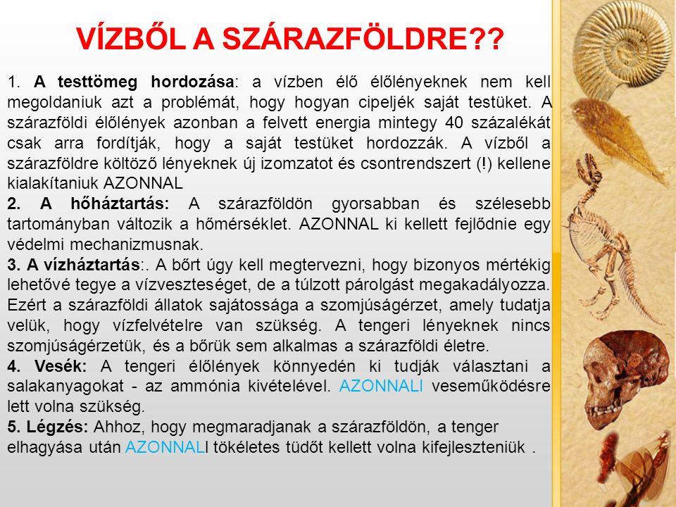VÍZBŐL A SZÁRAZFÖLDRE . 1.