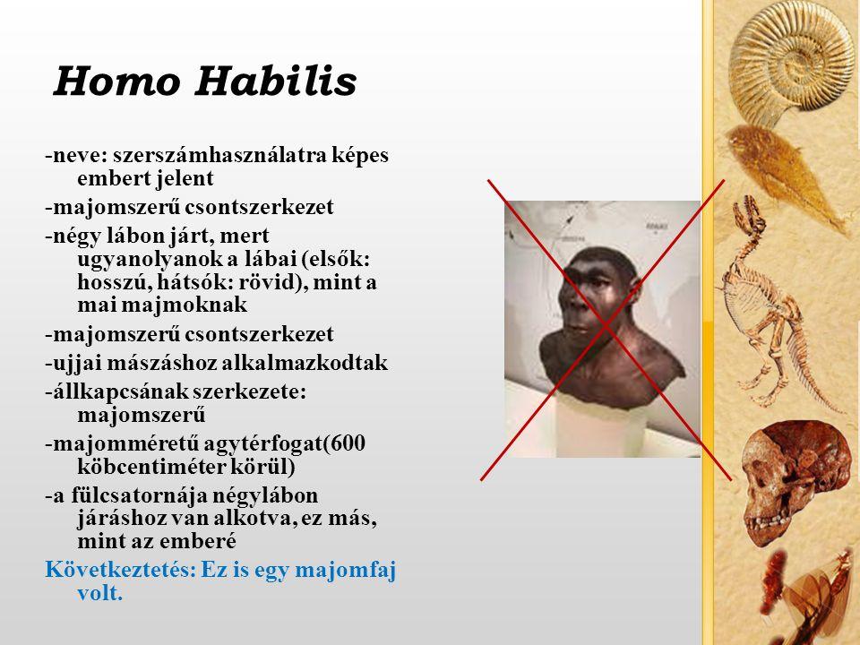 Homo Habilis -neve: szerszámhasználatra képes embert jelent -majomszerű csontszerkezet -négy lábon járt, mert ugyanolyanok a lábai (elsők: hosszú, hátsók: rövid), mint a mai majmoknak -majomszerű csontszerkezet -ujjai mászáshoz alkalmazkodtak -állkapcsának szerkezete: majomszerű -majomméretű agytérfogat(600 köbcentiméter körül) -a fülcsatornája négylábon járáshoz van alkotva, ez más, mint az emberé Következtetés: Ez is egy majomfaj volt.