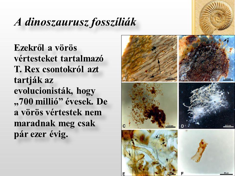 A dinoszaurusz fosszíliák Ezekről a vörös vértesteket tartalmazó T.