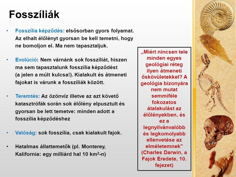 VÍZBŐL A SZÁRAZFÖLDRE?.1.