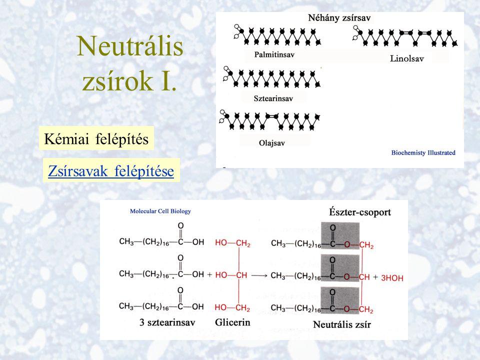 Neutrális zsírok I. Kémiai felépítés Zsírsavak felépítése