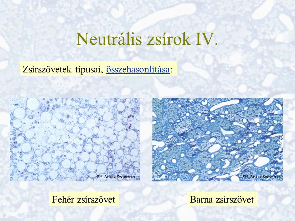Neutrális zsírok IV.