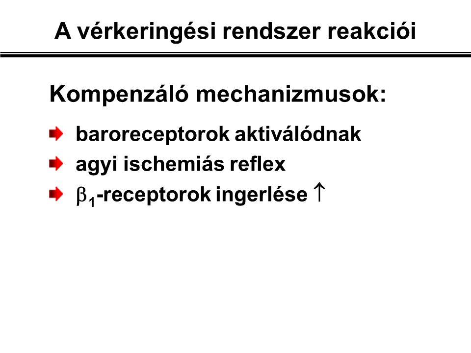 Kompenzáló mechanizmusok: baroreceptorok aktiválódnak agyi ischemiás reflex  1 -receptorok ingerlése 