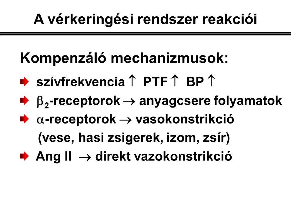 Kompenzáló mechanizmusok: szívfrekvencia  PTF  BP   2 -receptorok  anyagcsere folyamatok  -receptorok  vasokonstrikció (vese, hasi zsigerek, izom, zsír) Ang II  direkt vazokonstrikció A vérkeringési rendszer reakciói