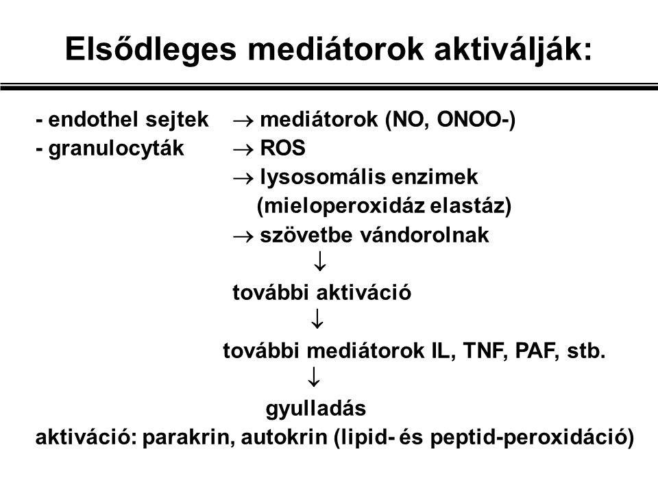Elsődleges mediátorok aktiválják: - endothel sejtek  mediátorok (NO, ONOO-) - granulocyták  ROS  lysosomális enzimek (mieloperoxidáz elastáz)  szövetbe vándorolnak  további aktiváció  további mediátorok IL, TNF, PAF, stb.