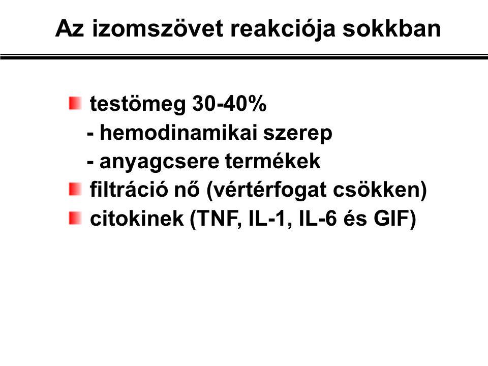 testömeg 30-40% - hemodinamikai szerep - anyagcsere termékek filtráció nő (vértérfogat csökken) citokinek (TNF, IL-1, IL-6 és GIF) Az izomszövet reakciója sokkban