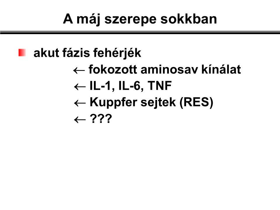 A máj szerepe sokkban akut fázis fehérjék  fokozott aminosav kínálat  IL-1, IL-6, TNF  Kuppfer sejtek (RES) 