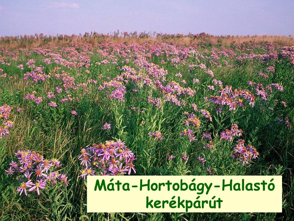 Máta-Hortobágy-Halastó kerékpárút