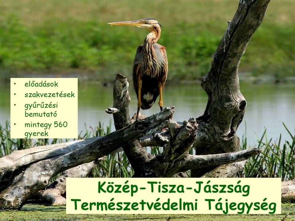 Közép-Tisza-Jászság Természetvédelmi Tájegység előadások szakvezetések gyűrűzési bemutató mintegy 560 gyerek