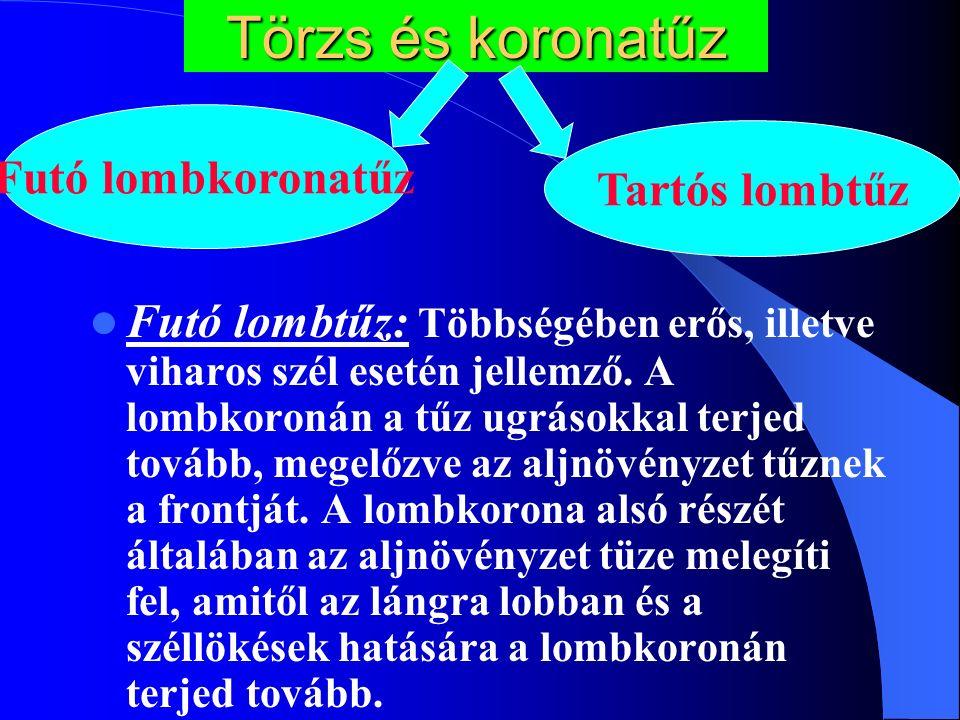 Törzs és koronatűz Futó lombtűz: Többségében erős, illetve viharos szél esetén jellemző.