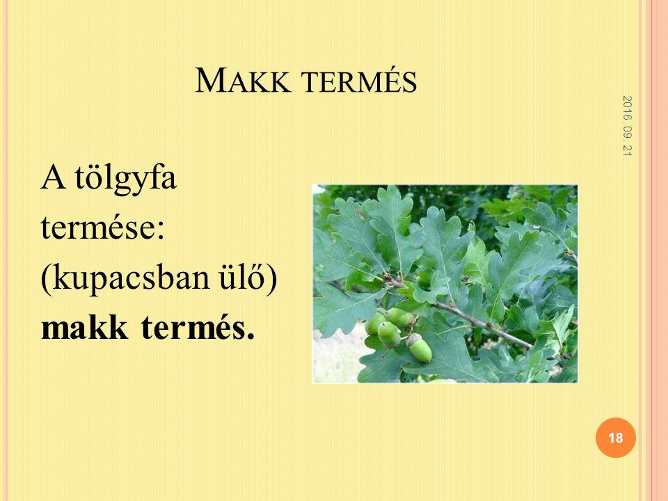 M AKK TERMÉS 2016. 09. 21. 18 A tölgyfa termése: (kupacsban ülő) makk termés.