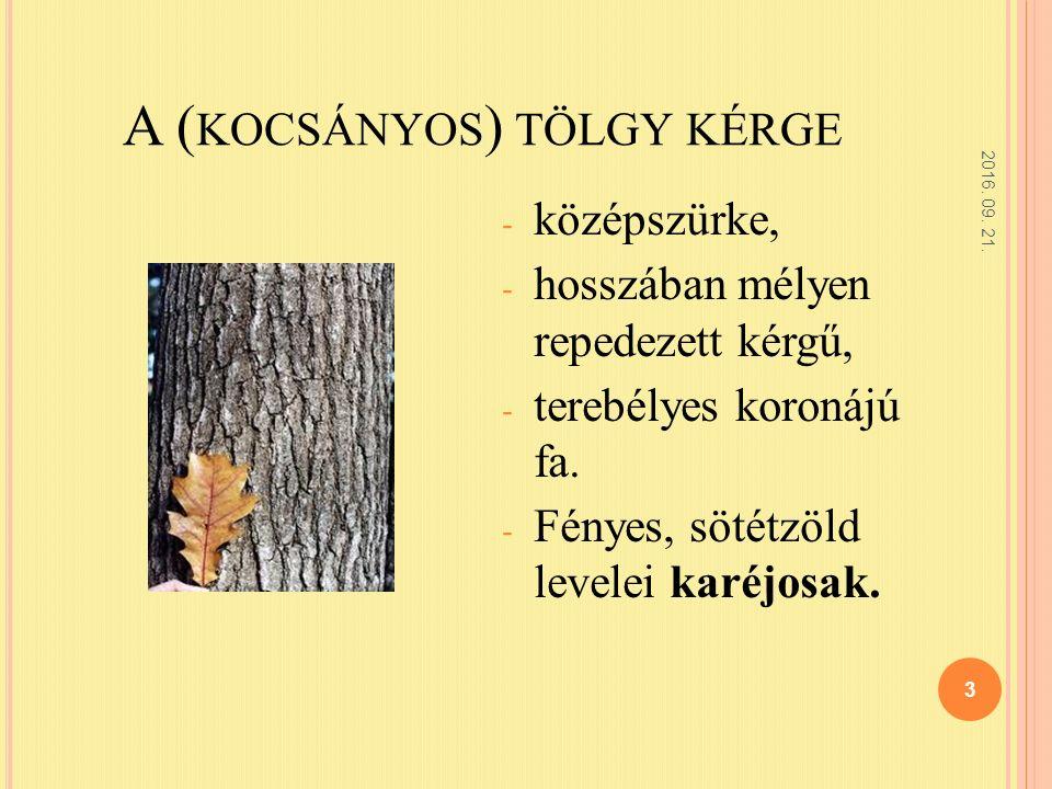 A ( KOCSÁNYOS ) TÖLGY KÉRGE - középszürke, - hosszában mélyen repedezett kérgű, - terebélyes koronájú fa.