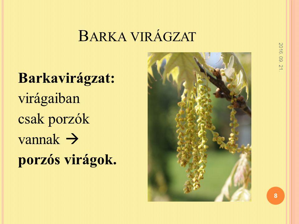 B ARKA VIRÁGZAT 2016. 09. 21. 8 Barkavirágzat: virágaiban csak porzók vannak  porzós virágok.
