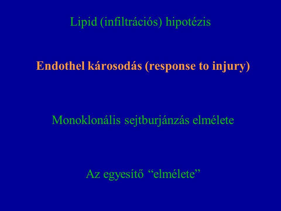 Lipid (infiltrációs) hipotézis Endothel károsodás (response to injury) Monoklonális sejtburjánzás elmélete Az egyesítő elmélete