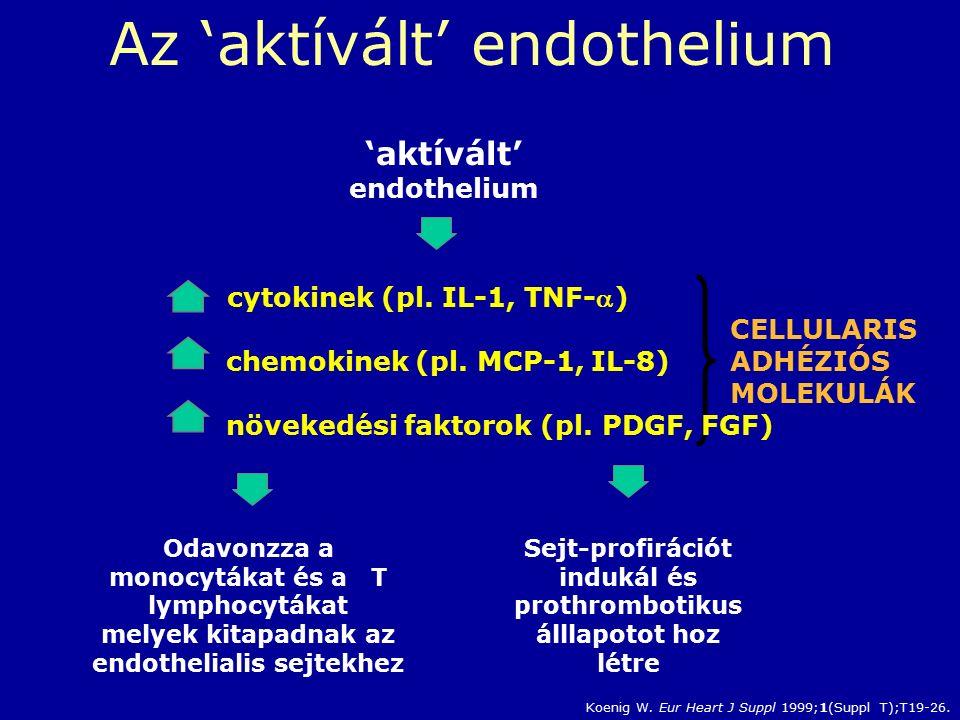 CELLULARIS ADHÉZIÓS MOLEKULÁK Sejt-profirációt indukál és prothrombotikus álllapotot hoz létre 'aktívált' endothelium Odavonzza a monocytákat és a T lymphocytákat melyek kitapadnak az endothelialis sejtekhez cytokinek (pl.