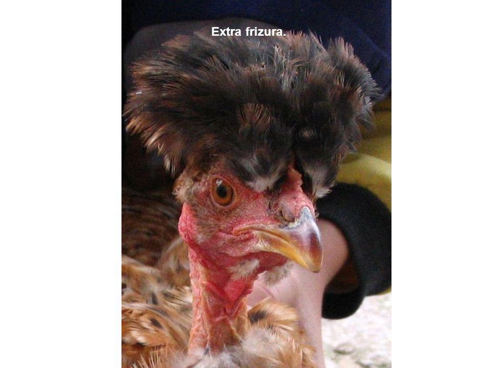 Extra frizura.